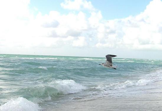 bird-fly