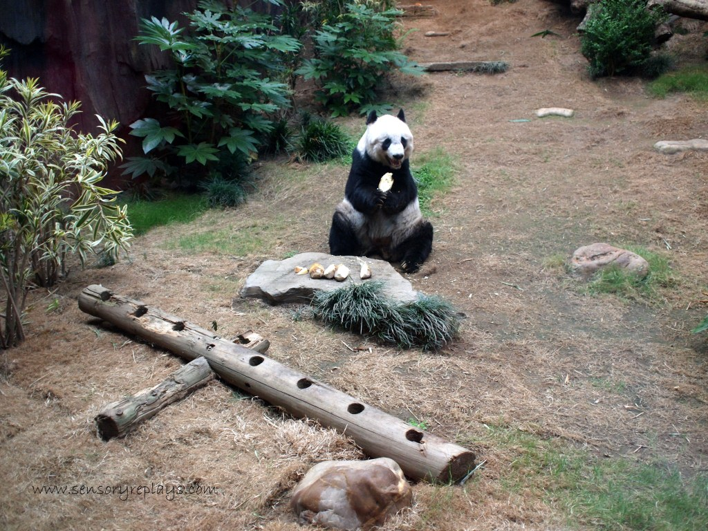 Giant Panda Adventure Sensory Replays